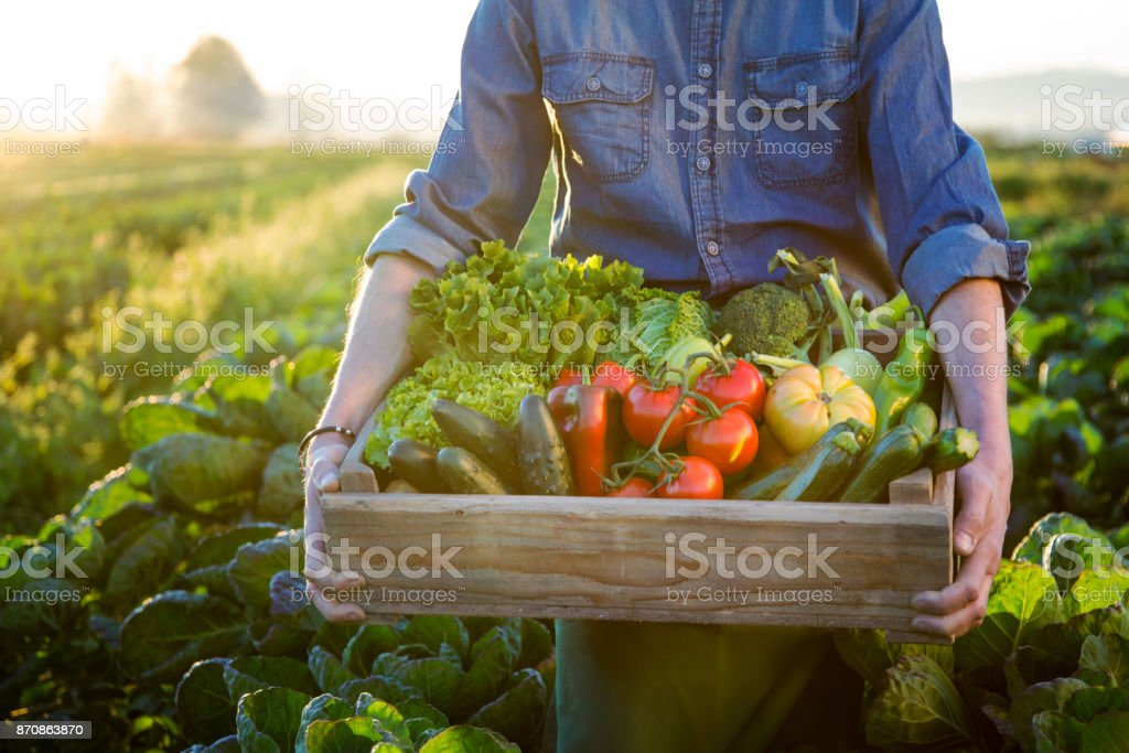 Hands holding a grate of raw vegetables stock photo