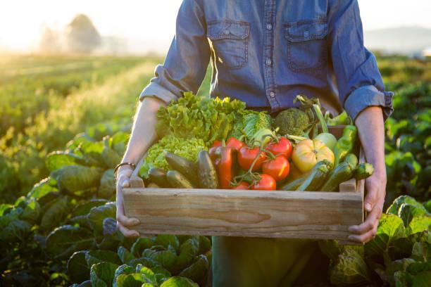 Hände halten ein Gitter aus rohem Gemüse – Foto