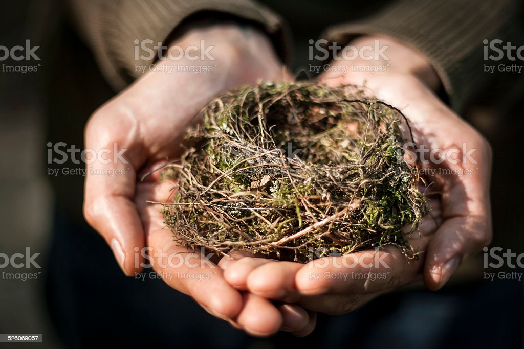 hands holding a nest stock photo