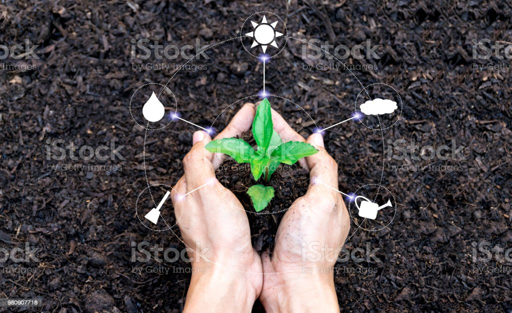 hands holding a plant sapling tree with the environment planting icon 4.0 network technology stock photo
