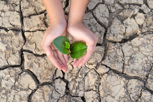 Hands holding a tree growing on cracked ground, Save the world, Environmental problems, Protect nature, The concept of world environment day