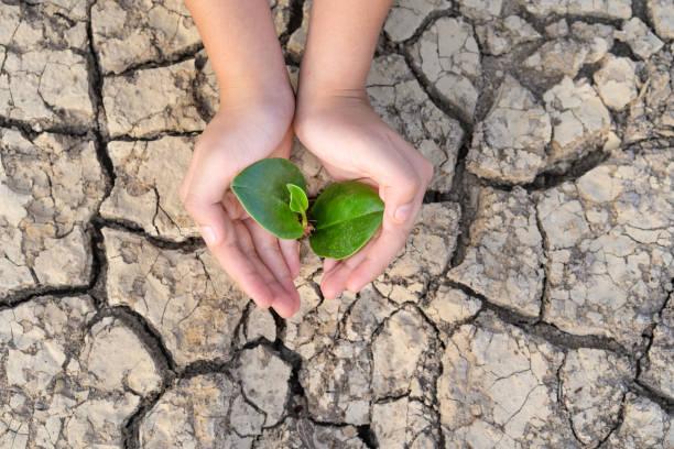 handen die een boom groeien op gekraakte grond, de wereld redden, milieuproblemen, bescherming van de natuur, het concept van de wereldmilieu dag - new world stockfoto's en -beelden
