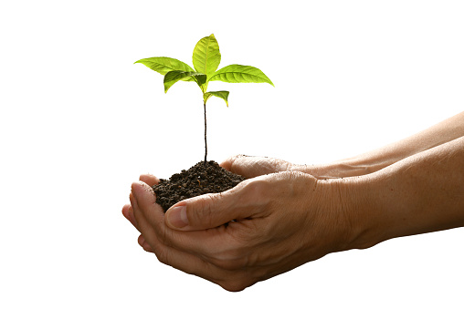 1089961140 istock photo Hands holding and caring a green young plant isolated on white background 1128690971