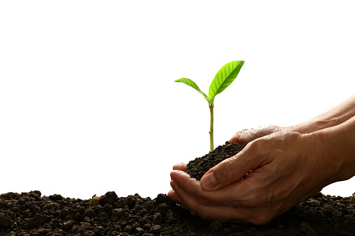 1089961140 istock photo Hands holding and caring a green young plant isolated on white background 1128690976