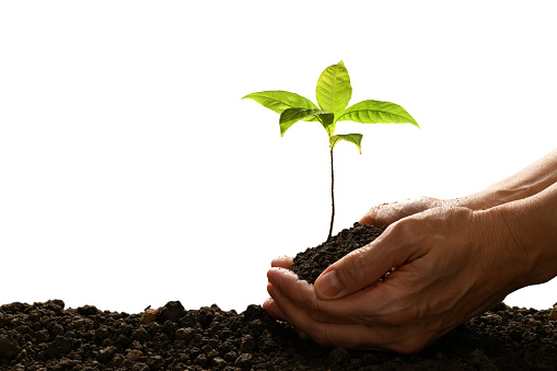 1089961140 istock photo Hands holding and caring a green young plant isolated on white background 1128690981