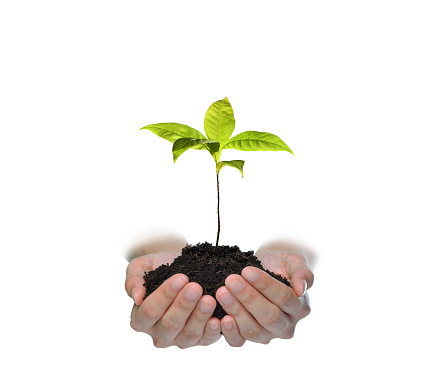 1089961140 istock photo Hands holding and caring a green young plant isolated on white background 1128691001