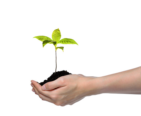 1089961140 istock photo Hands holding and caring a green young plant isolated on white background 1128691002