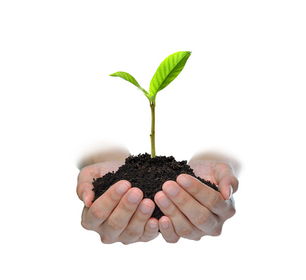 1089961140 istock photo Hands holding and caring a green young plant isolated on white background 1128691005