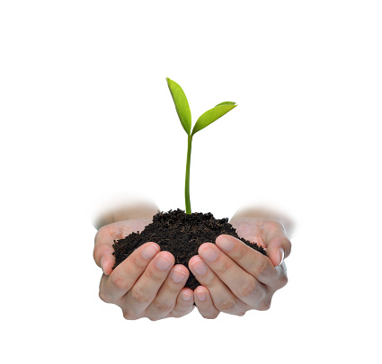1089961140 istock photo Hands holding and caring a green young plant isolated on white background 1128691011