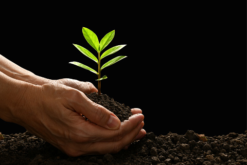 637583458 istock photo Hands holding and caring a green young plant on black background 941023626