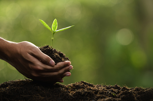 1089961140 istock photo Hands holding and caring a green young plant 1089961128