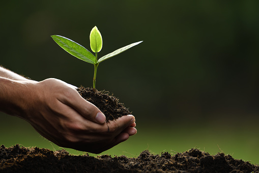 1089961140 istock photo Hands holding and caring a green young plant 1089961130