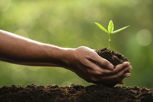 1089961140 istock photo Hands holding and caring a green young plant 1089961134