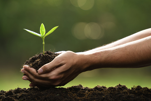 1089961140 istock photo Hands holding and caring a green young plant 1089961186