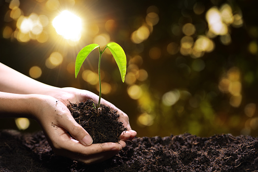 1089961140 istock photo Hands holding and caring a green young plant 1090504450