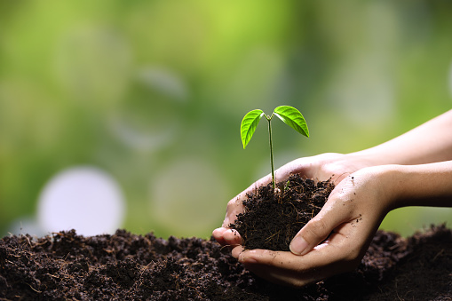 1089961140 istock photo Hands holding and caring a green young plant 1090504550