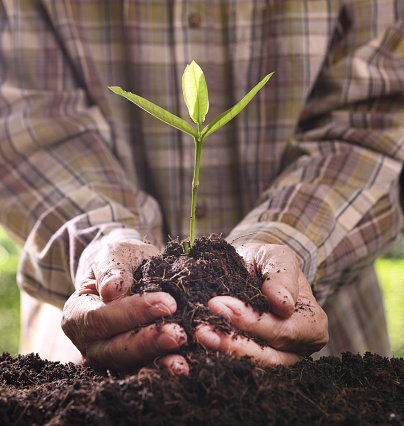 1089961140 istock photo Hands holding and caring a green young plant 1126371957