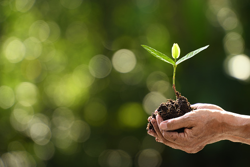 1089961140 istock photo Hands holding and caring a green young plant 1126371963