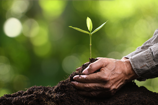 1089961140 istock photo Hands holding and caring a green young plant 1126372043