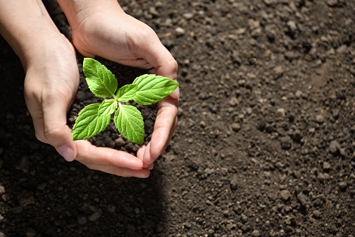 637583458 istock photo Hands holding and caring a green young plant 1184767089