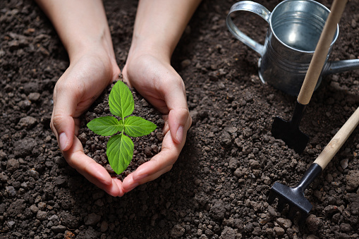 637583458 istock photo Hands holding and caring a green young plant 1184767096