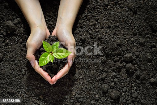 istock Hands holding and caring a green young plant 637583458