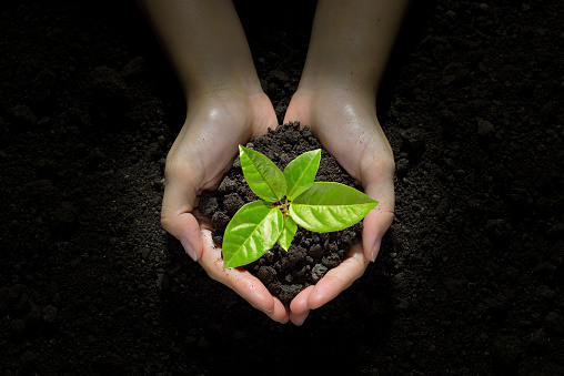 637583458 istock photo Hands holding and caring a green young  plant 637583770