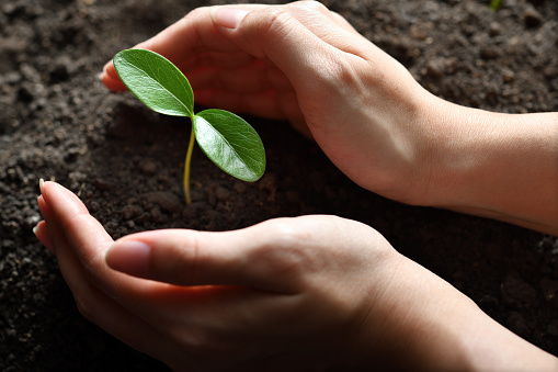 637583458 istock photo Hands holding and caring a green young plant 919047300
