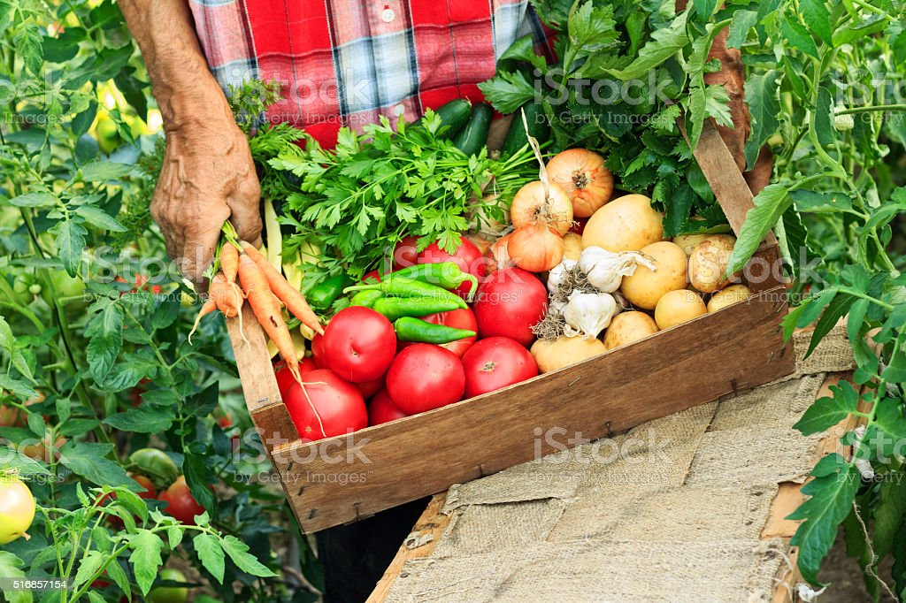 Hands holding crate with vegetables stock photo