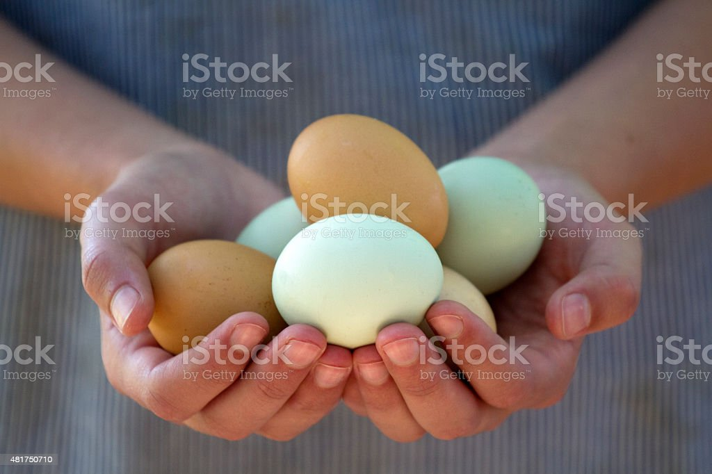 Hands Holding Eggs stock photo