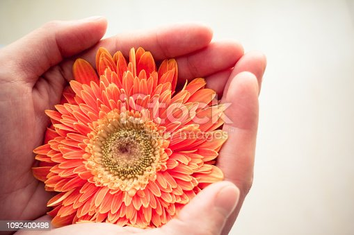 Close-up of woman hands holding a flower.