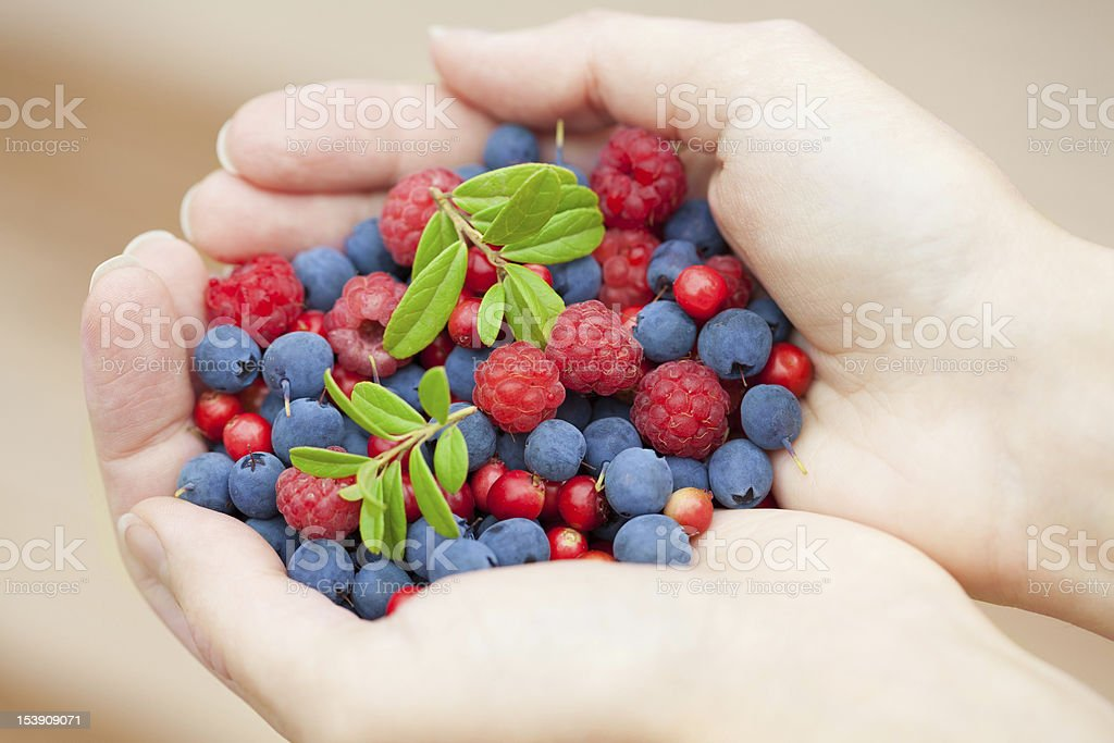 hands holding fresh berries royalty-free stock photo