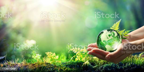 Photo of Hands Holding Globe Glass In Green Forest - Environment Concept - Element of image furnished by NASA