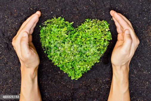 istock hands holding green heart shaped tree 465326133