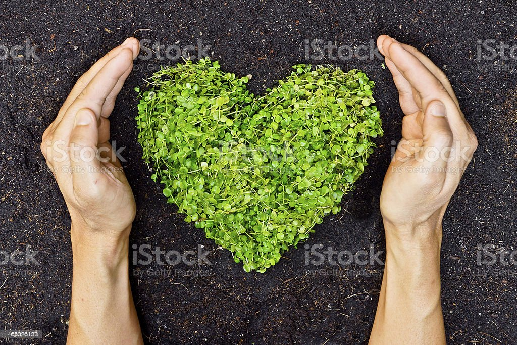 Verde Mãos segurando árvore em forma de coração - foto de acervo
