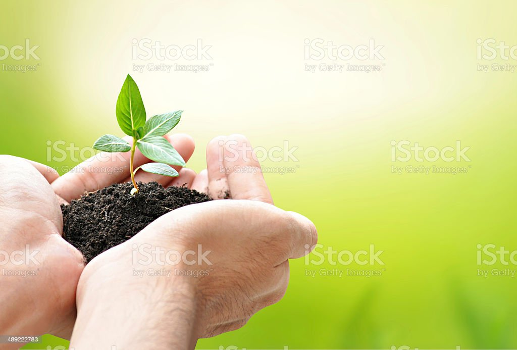 Hands holding green seedling with soil stock photo