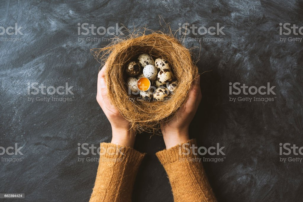 Hands holding nest with eggs stock photo