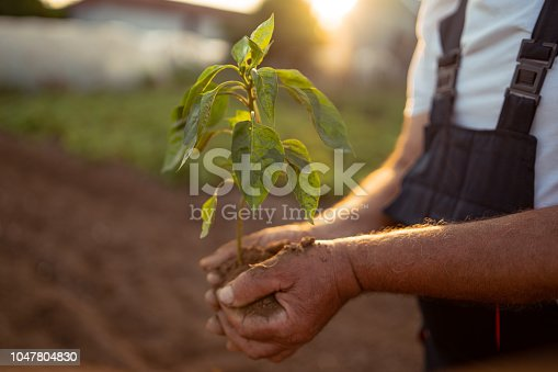 Hands holding new growth plant in sunset