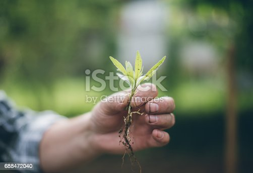 621615390istockphoto Hands holding new growth plant 688472040