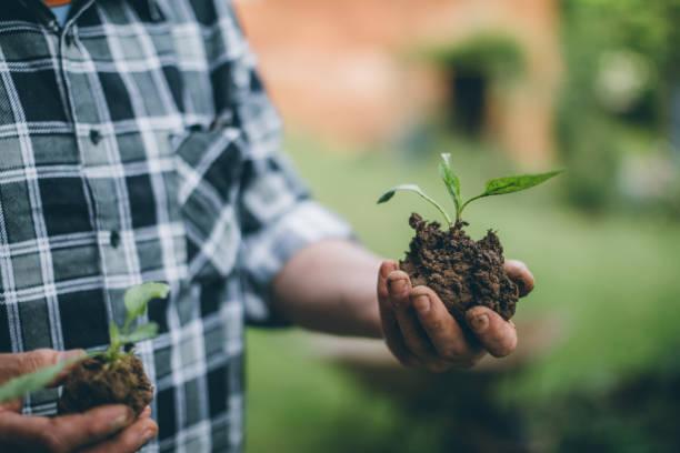 hands holding new growth plant - piantare foto e immagini stock