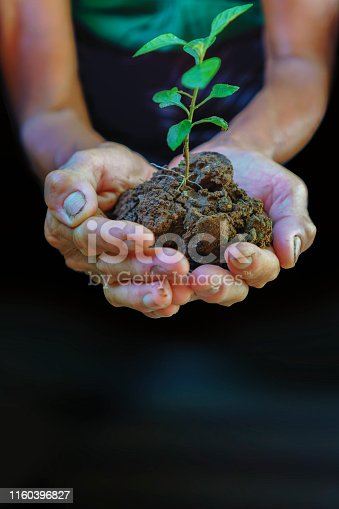 621615390istockphoto Hands holding new growth plant-dark background 1160396827