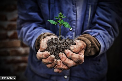 621615390istockphoto Hands holding new growth plant-dark background 514408072