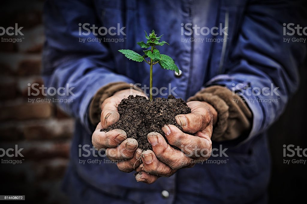 Hands holding new growth plant-dark background stock photo
