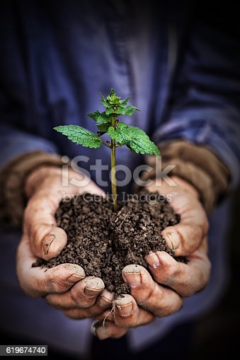 621615390istockphoto Hands holding new growth plant-dark background 619674740