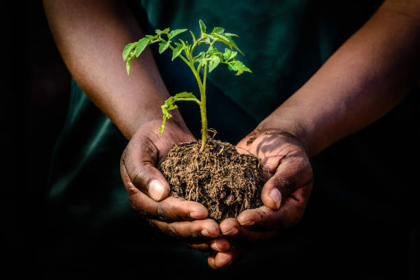 Hands holding plant in soil stock photo