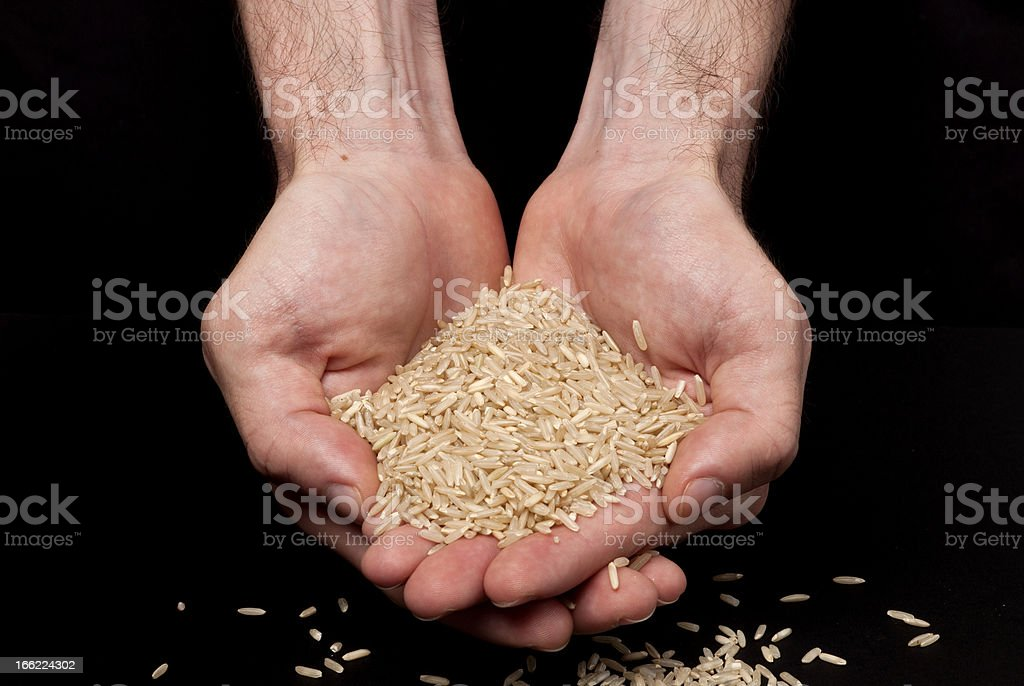 Hands holding raw brown rice royalty-free stock photo