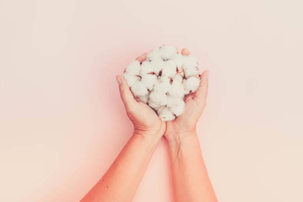 händer som håller råbomull knoppar - cotton growing bildbanksfoton och bilder