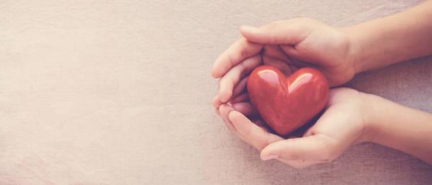 händer som håller rött hjärta, sjukvård, kärlek, organdonation, familjeförsäkring, csr, världshjärta dag, världshälsodagen, välbefinnande, tacksamhet, vara snäll, vara tacksam koncept - emotionellt stöd bildbanksfoton och bilder