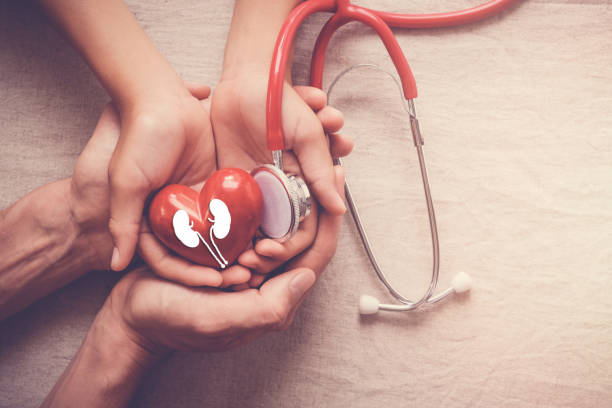 hands holding red heart with stethoscope, world kidney day stock photo