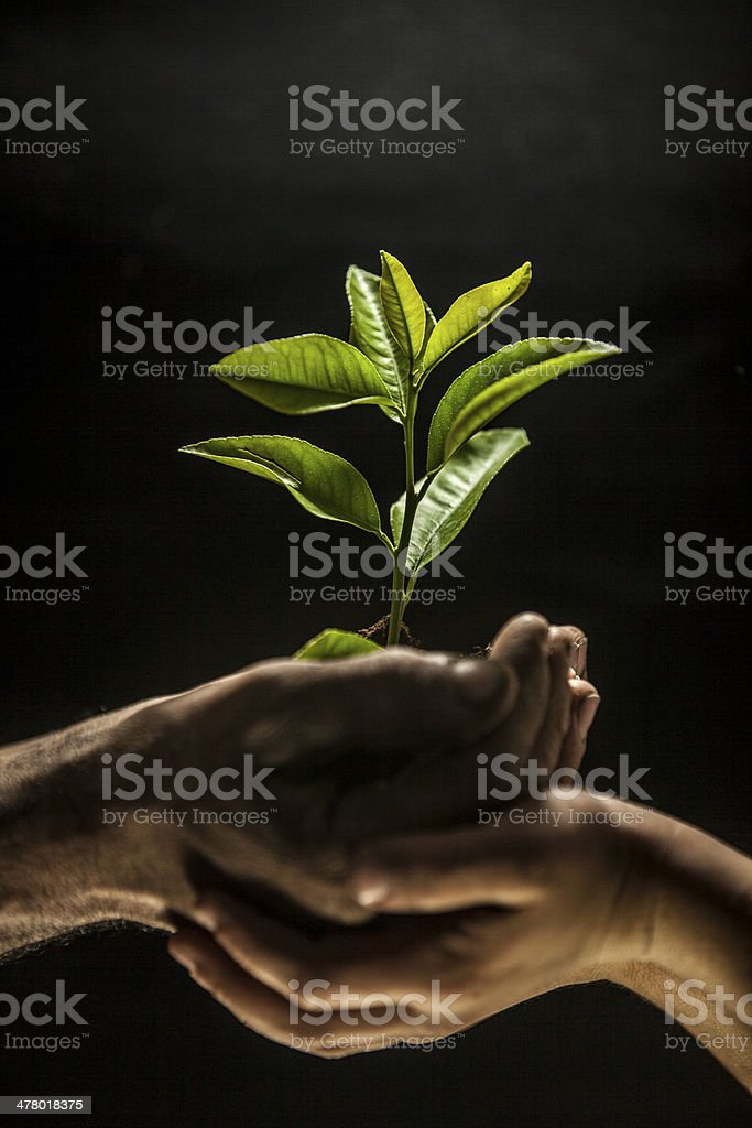 Hands holding sapling in soil stock photo